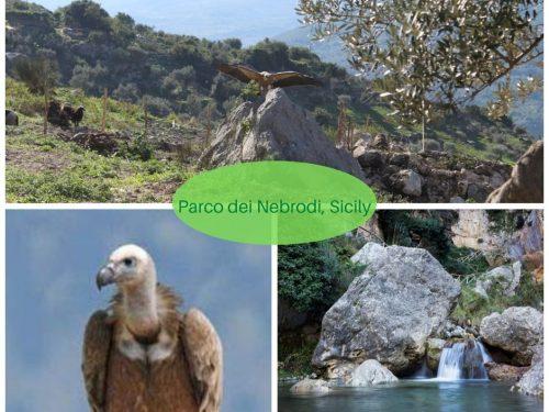 Parco dei Nebrodi, Sicily